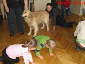 dog41